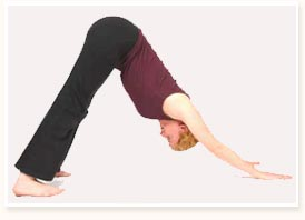 Yoga Poses Yoga Postures Yoga Position Yoga Asanas Yoga Exercise Basic Yoga Pose